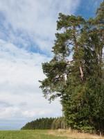 """Das Ausgangsbild von """"Wald #8294"""""""