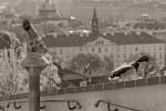 """Subhash: """"Schöne Aussicht auch für Enten"""""""