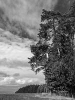"""Schritt 3 der Ausarbeitung von """"Wald #8294"""""""