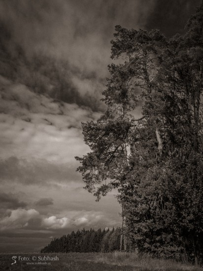 "Subhash: ""Wald #8291"""