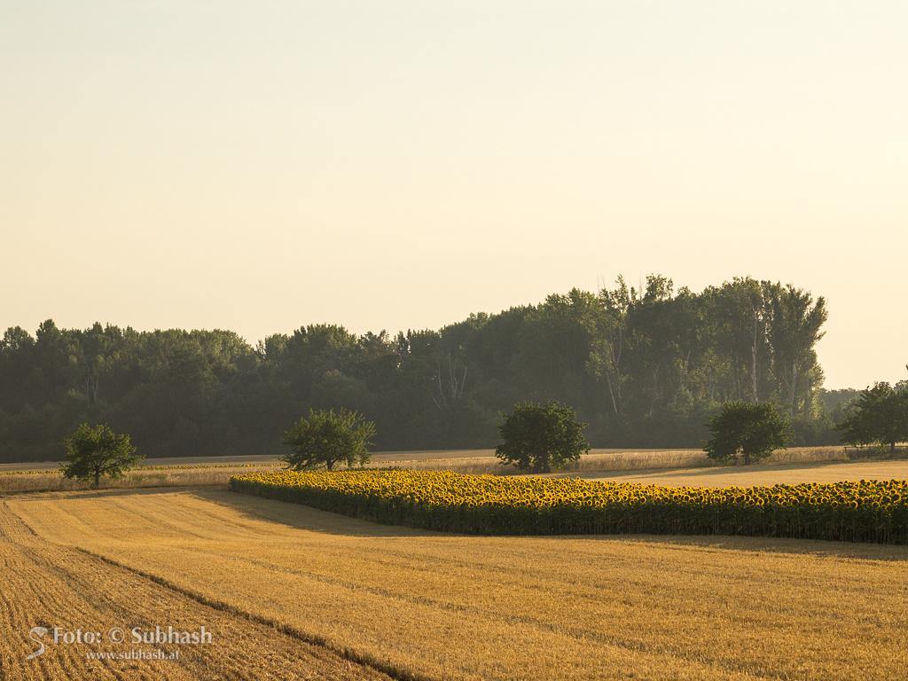 """Subhash: """"Sonnenaufgang #9769"""""""