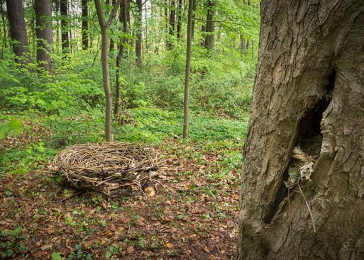 Franz Bogner & Subhash bauten dieses Nest (das große)