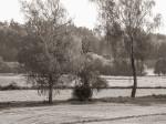 """Subhash: """"Fotospaziergang um den Brühlteich in Schwarzenau #5168"""""""
