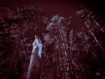 """Subhash: """"Die Bäume wachsen nicht in den Himmel #6449"""""""