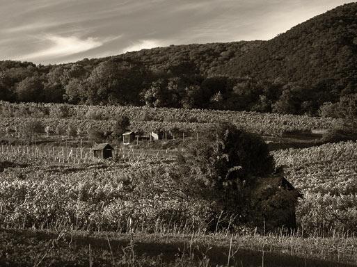 Subhash: «Cabañas en el viñedo»