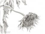 Subhash: «El girasol invernal #2687»