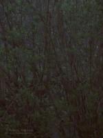 "Subhash: ""Frühlingsabend #4585"""