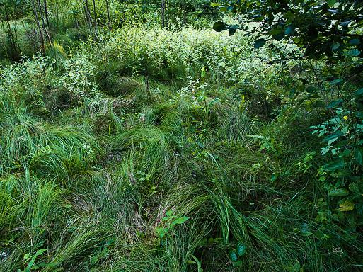 "Subhash: ""Im Wald #8097"""