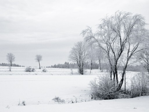 Subhash: «Invierno 2 #4444»