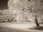 """Subhash: """"Baum mit Schloss #877"""""""