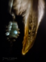 Subhash: «La pluma #1188»