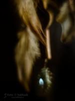 Subhash: «La pluma #1190»