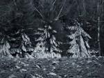 Subhash: «Las carpas frías #894»