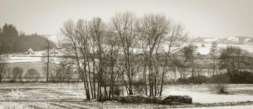 Subhash: «Madera y grupo de árboles #6154, 58»