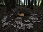 """Ausgangsbild zu """"Pilze #4373"""""""