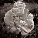 Subhash: «La rosa»