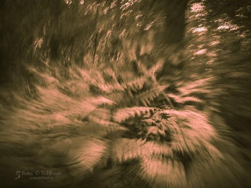 Subhash: «Un espíritu boscoso #6422»