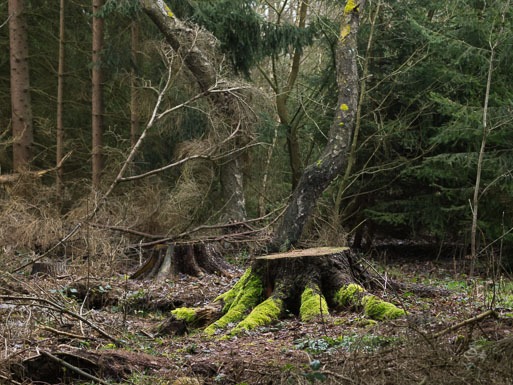 "Subhash: ""Wald #1104"""