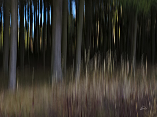 "Subhash: ""Wald #1163"""