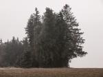 "Subhash: ""Wald #4052"""
