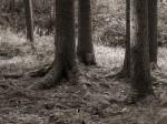 "Subhash: ""Wald #8030"""