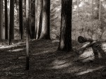 "Subhash: ""Wald #8049"""