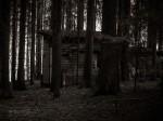 "Subhash: ""Wald #8051"""