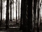 "Subhash: ""Wald #8054"""