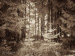 "Subhash: ""Wald #838"""