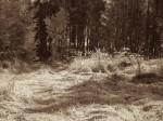 "Subhash: ""Wald #840"""