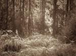 "Subhash: ""Wald #844"""