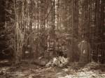 "Subhash: ""Wald #848"""