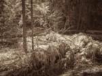 "Subhash: ""Wald #856"""