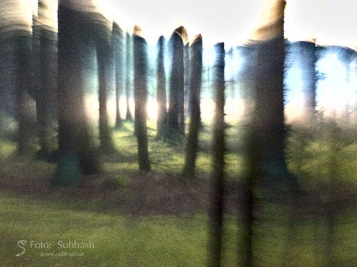 "Subhash: ""Forest Vision #9231"""