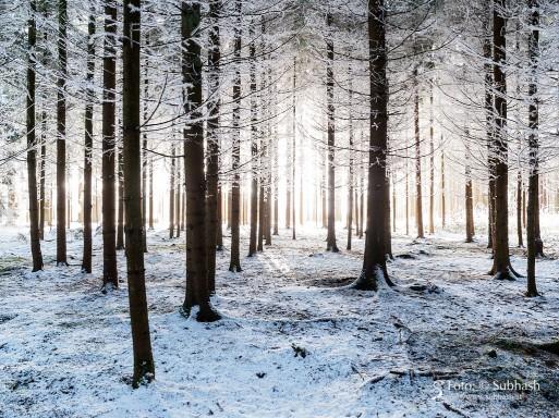"""Subhash: """"Wintermorgen im Wald #9654"""""""