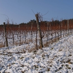 1 - Wein im Winter - vinícola en invierno
