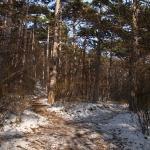 3 - Waldwege - caminos forestal