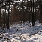 4 - Waldlichtung - claro forestal